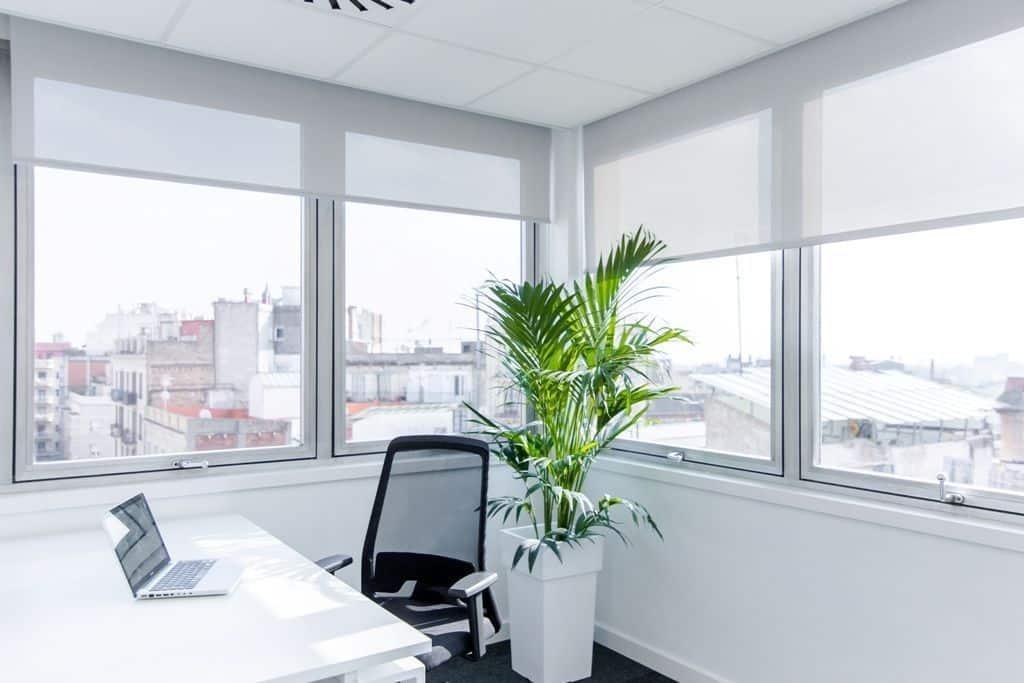 Mire Workspace, business center en BArcelona. Sobre los beneficios de las plantas en el espacio de trabajo